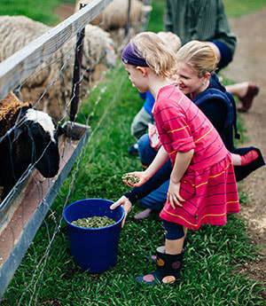Best Farm Stays for families in Brisbane