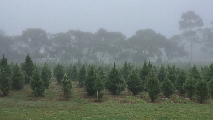 Sydney Christmas Tree Farm