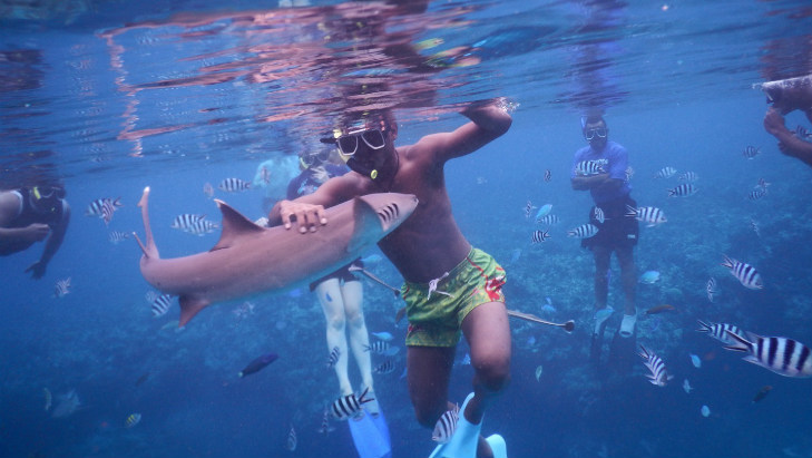 Cruising with kids shark snorkelling fiji