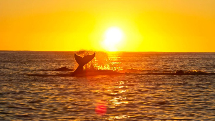 Where to go whale watching in south east queensland this winter %281%29